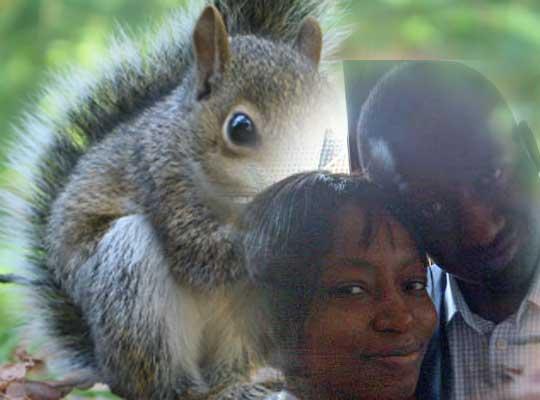 Adesquirrel2