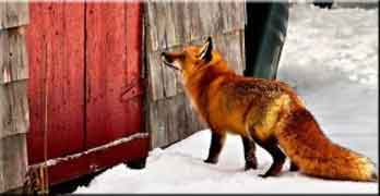Sector foxes warn that changing leasehold will be 'dangerous'. But for whom?