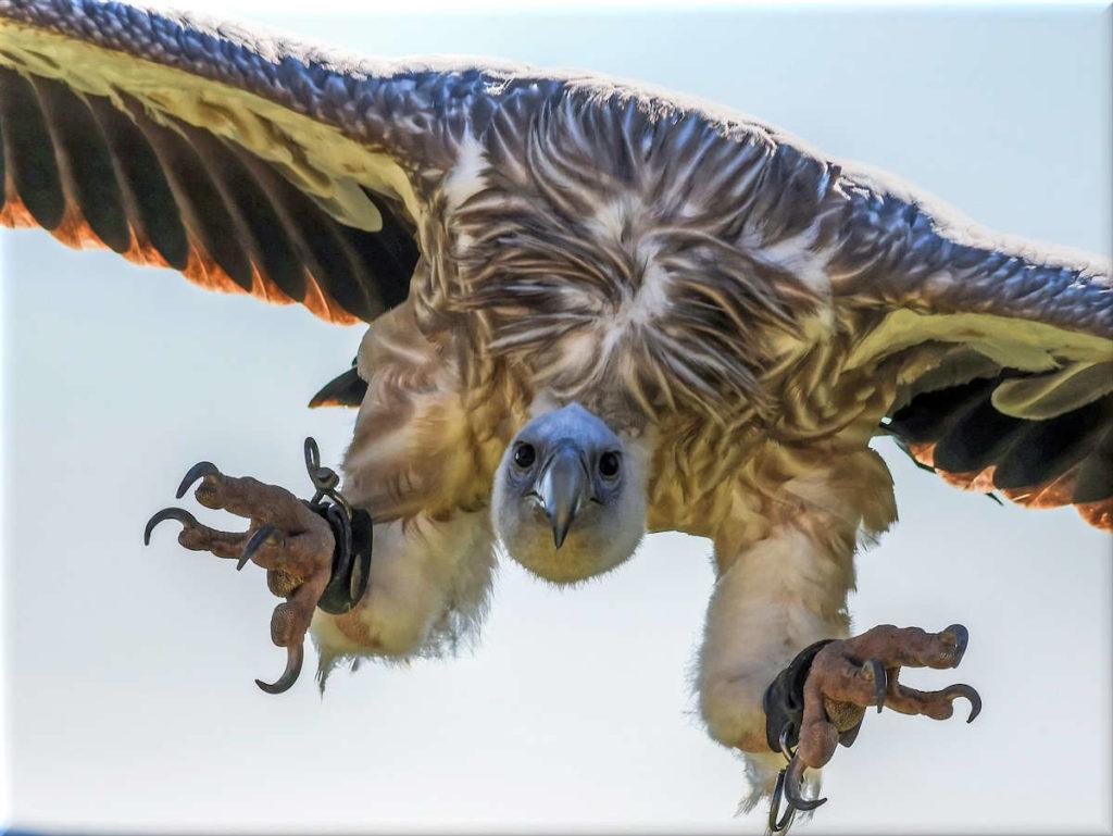 vultures cladding sites