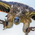 cladding scandal vultures